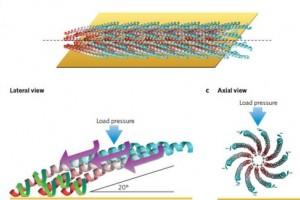 Ученые заставили генно-модифицированные вирусы вырабатывать электрическую энергию.